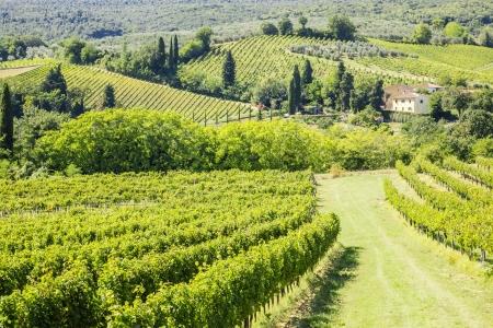 Un'immagine di una bella collina del vino in Italia Archivio Fotografico - 22725652