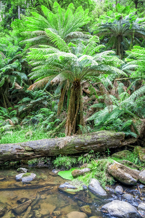 daintree: An image of the beautiful tropical forest in Australia