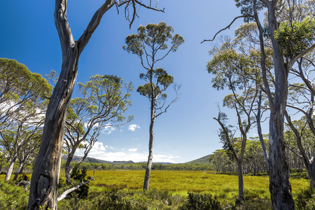 clair: An image of a beautiful Tasmania landscape