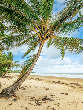 An image of a nice beach with palm trees photo
