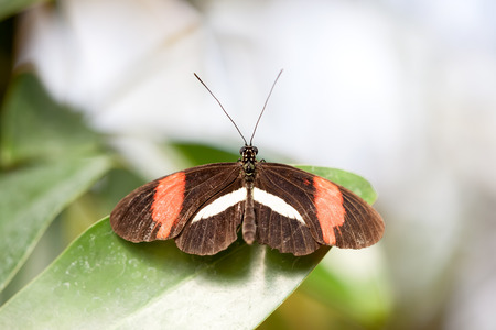 An image of a nice nymphalidae butterfly photo
