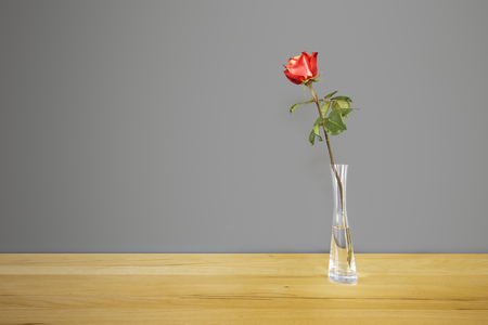 red flower: An image of a red rose in front of a gray wall