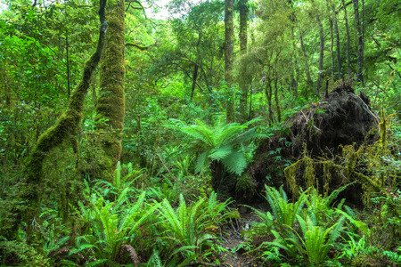 An image of the Jungle New Zealand