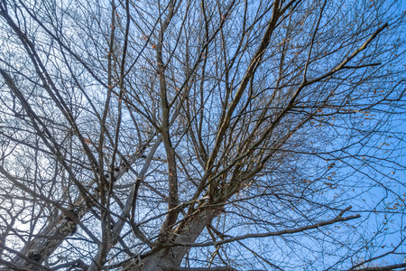 An image of a leafless tree in the sky Stock Photo