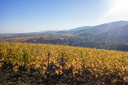 An image of a view over a vineyard at Alsace France in autumn light