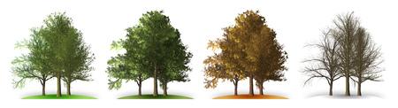 A tree in four seasons Reklamní fotografie