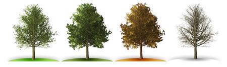 Tree in four seasons Reklamní fotografie - 124798027