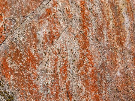 A photography of a stone with red lichen