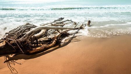 An image of a dead tree at the beach of Moeraki New Zealand