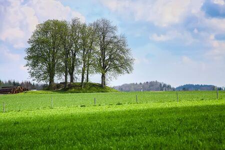 An image of a leafless bush in the green meadow Zdjęcie Seryjne - 130150910