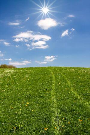 An image of some tracks in the grass Zdjęcie Seryjne - 130150913