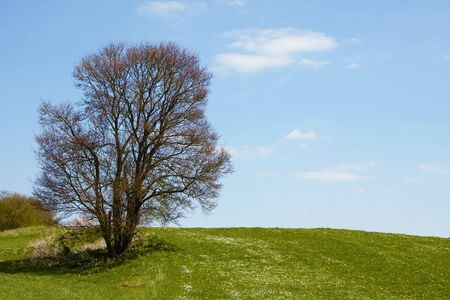 An image of a leafless bush in the green meadow
