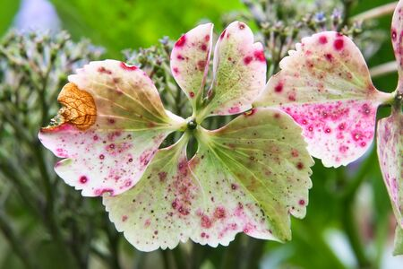 An image of a hydrangea detail blossom