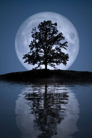An image of a beautiful full moon with tree lake reflections Foto de archivo