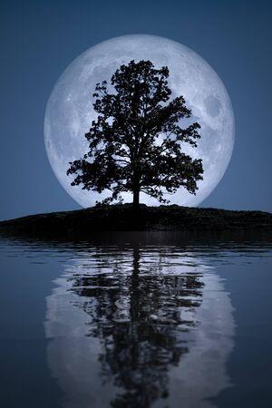 Une image d'une belle pleine lune avec des réflexions de lac d'arbre Banque d'images