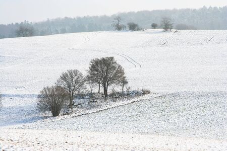 A photography of a snowscape with trees Banque d'images - 130128431
