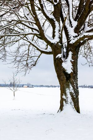 An image of a nice winter trees