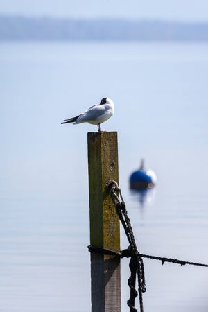 An image of a nice seagull at the lake Starnberg Reklamní fotografie