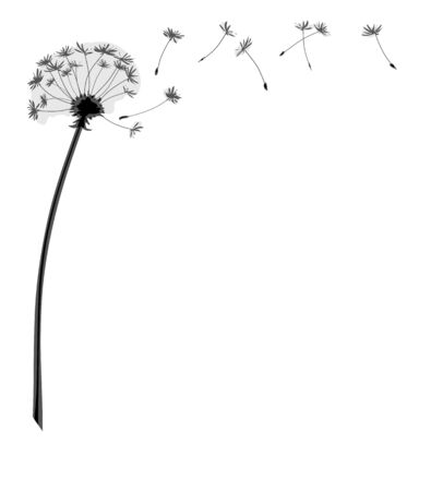 A dandelion flower with flying seeds