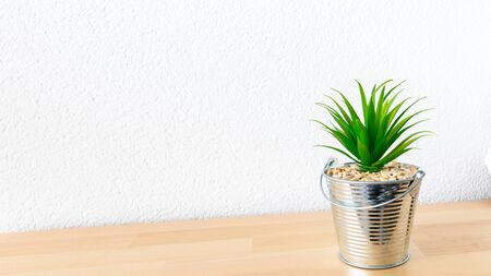 An image of a succulent on a table white background Archivio Fotografico