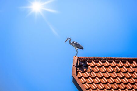 An image of a heron on a red roof