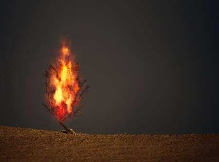 An image of a burning thorn bush christian symbol Reklamní fotografie