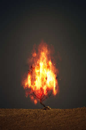 An image of a burning thorn bush christian symbol