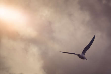 An image of a seagull in the evening sky Banque d'images