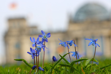 bluebell flowers in front of a big historical building