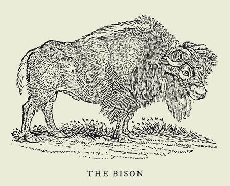 the bison in profile view (after an antique woodcut, engraving, illustration from the 18th century)