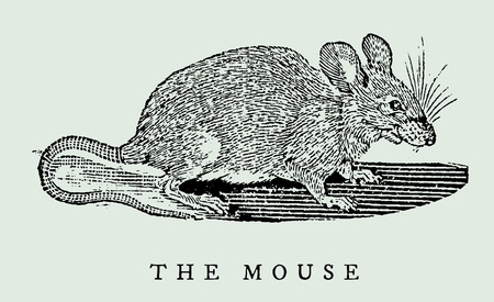 the mouse in profile view (after a vintage illustration from the 17th century)
