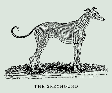 Greyhound in profile view illustration