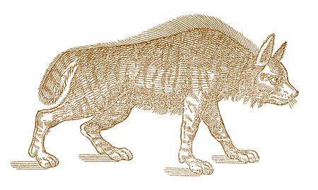 Hyena (hyaena) in profile view vector illustration.