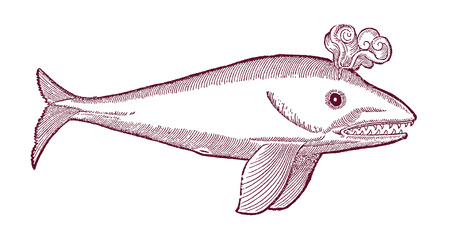 whale physeter illustration in profile view (after a historical or vintage woodcut from the 16th century) Stock Illustratie