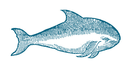 harbour porpoise phocoena illustration in profile view (after a historical or vintage woodcut from the 16th century) Stock Illustratie