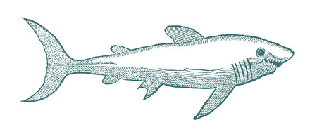 Shark with open mouth in profile view.