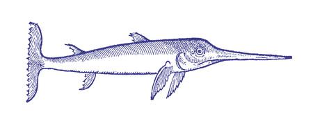 Sad looking swordfish (xiphias gladius) in profile view.