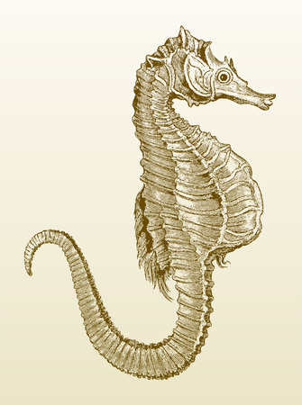 Seahorse (hippocampus) on a yellowish-brown gradient background. Brown colored illustration after a vintage engraving from the 19th century Illustration