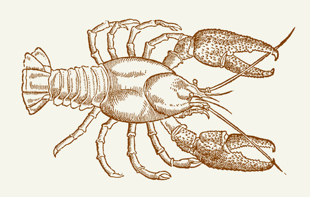 Illustration of a european crayfish (astacus astacus) after a vintage woodcut engraving from the 16th century. Easy editable in layers