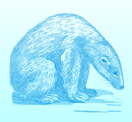 Sitting polar bear (ursus maritimus) looking sadly to the ground. Blue colored illustration on a blue green gradient background after an engraving from the 18th century. Easy editable in layers