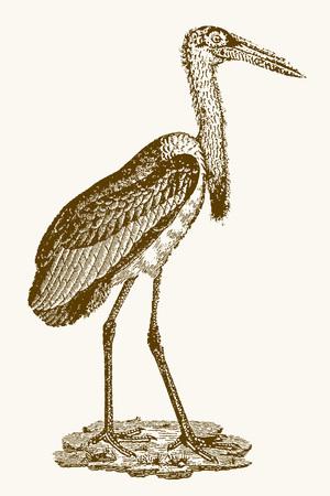 long-legged marabou stork (leptoptilos crumenifer) sitting on a rock. Illustration after a vintage engraving from the 19th century