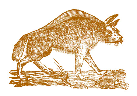 A fish lying on the ground in front of a striped hyena (hyaena hyaena) in profile view. Illustration after a historic woodcut engraving from the 17th century