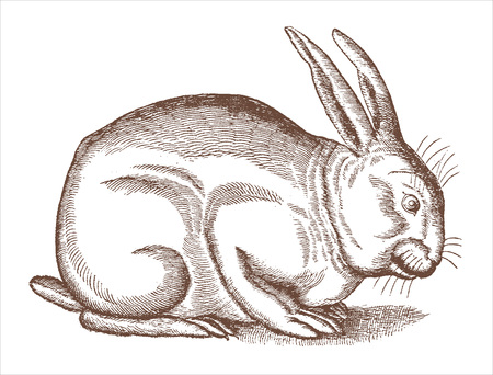 Crouching rabbit or bunny in profile view. Illustration after a historic woodcut engraving from the 16th century