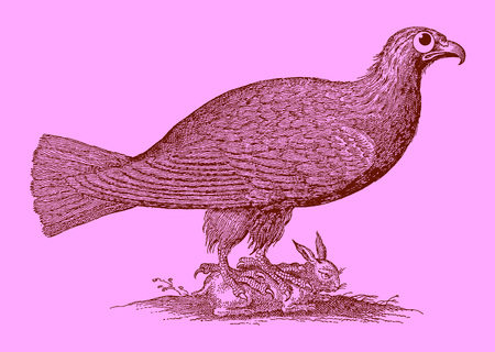 Cute predator: eagle sitting on a captured rabbit. Illustration after a historic woodcut engraving from the 17th century. Easy editable in layers
