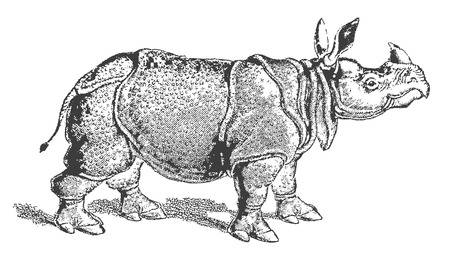 Rinoceronte indio (rhinoceros unicornis) en vista de perfil. Ilustración después de una xilografía o grabado histórico de principios del siglo XIX.