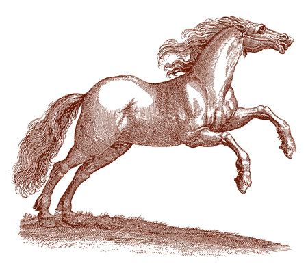 Jumping hungarian horse equus with a blowing mane. Illustration after a historic engraving from the 17th century Фото со стока - 127459305