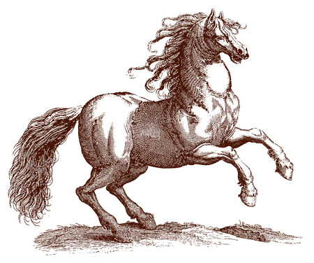 Jumping horse equus with a blowing mane and a large tail. Illustration after a historic engraving from the 17th century