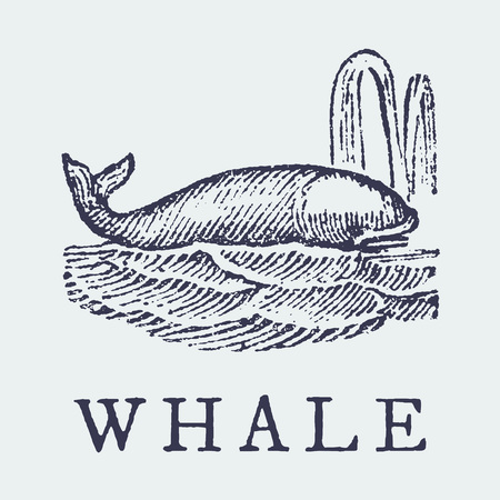 The whale. Illustration after a vintage woodcut engraving from the 19th century. Easy editable in layers