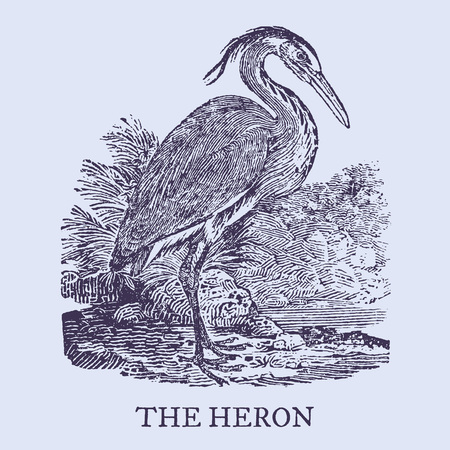 The heron. Illustration after a vintage woodcut engraving from the 19th century. Easy editable in layers. Easy editable in layers