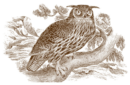 Eurasian or european eagle-owl (bubo bubo) with funny ear tufts sitting on a branch. Illustration after a historic steel engraving from the early 19th century